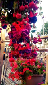 marandaelizabethfucshiaflowers